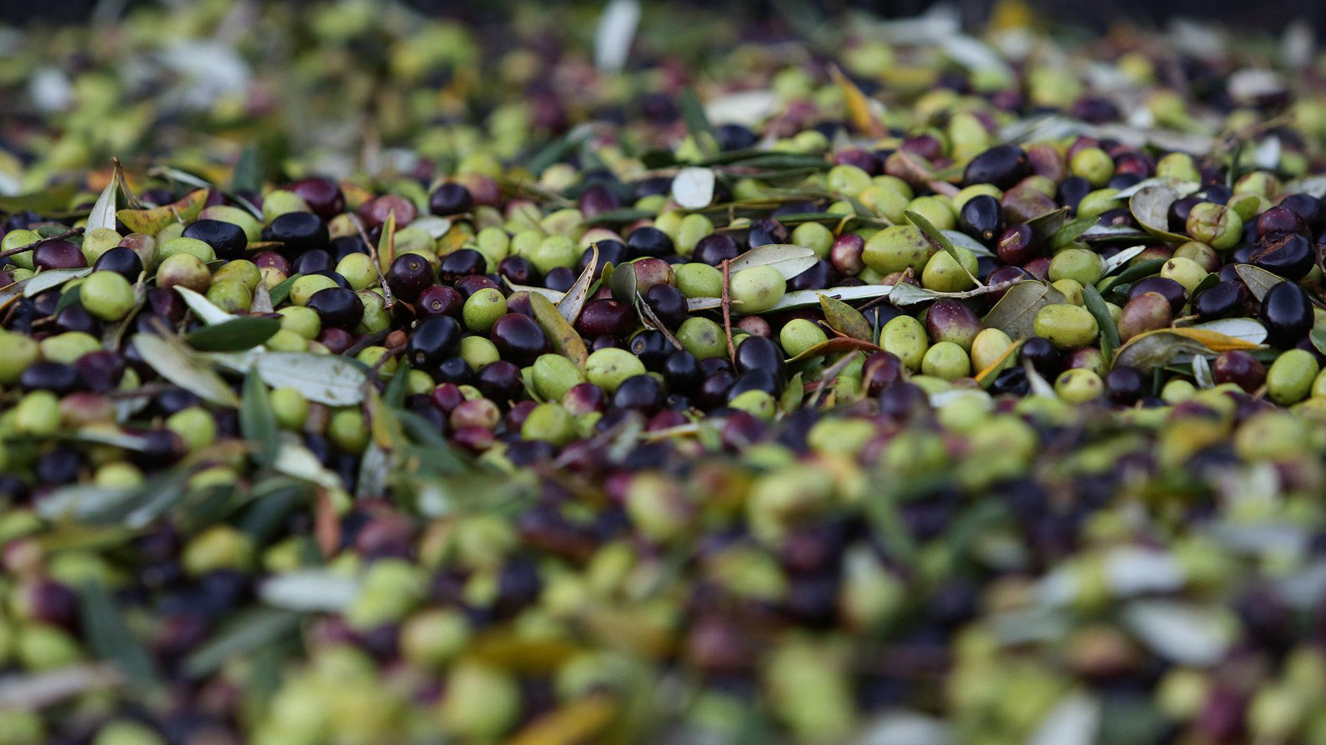 olivery olives
