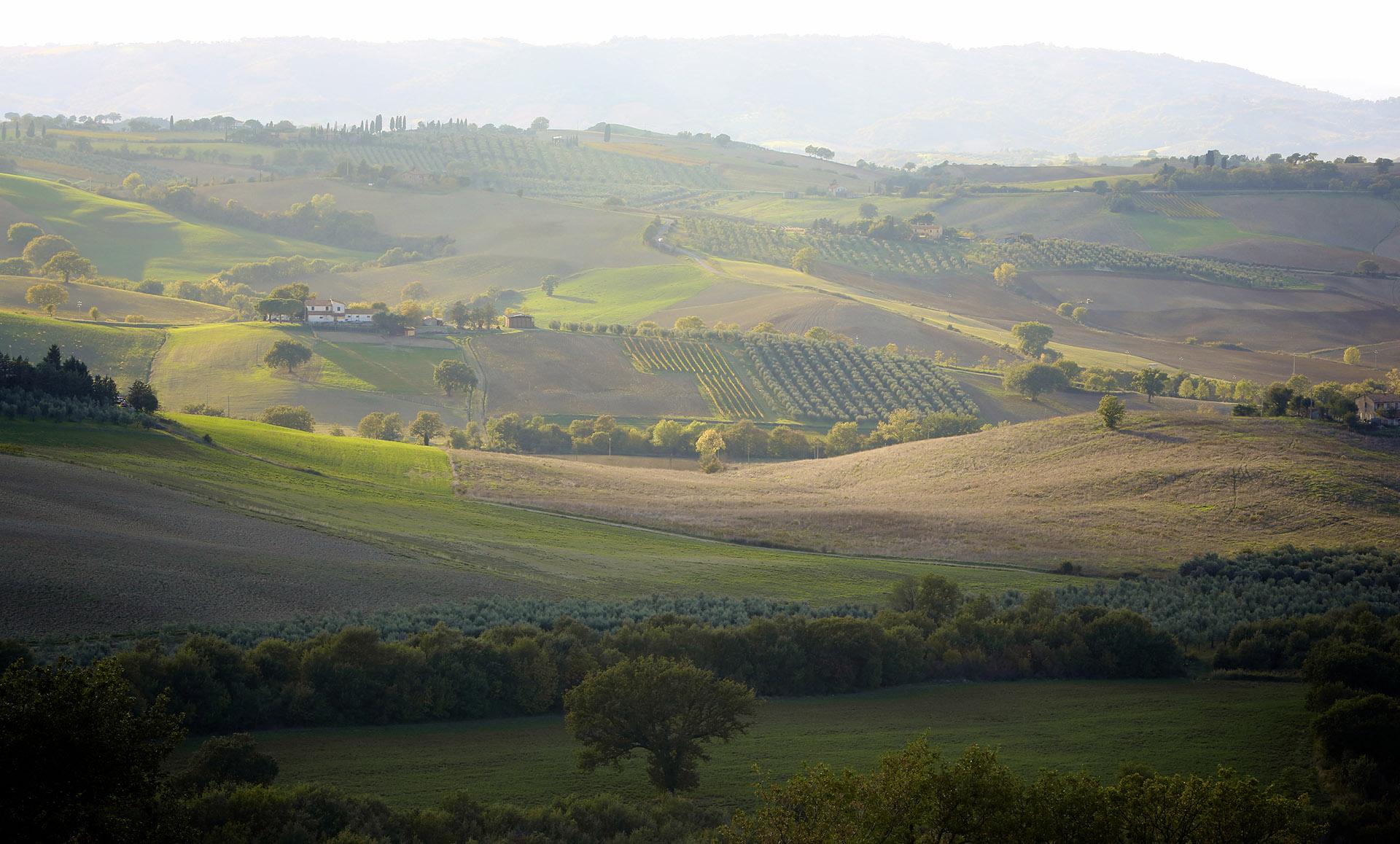olivery italiaanse olijfolie