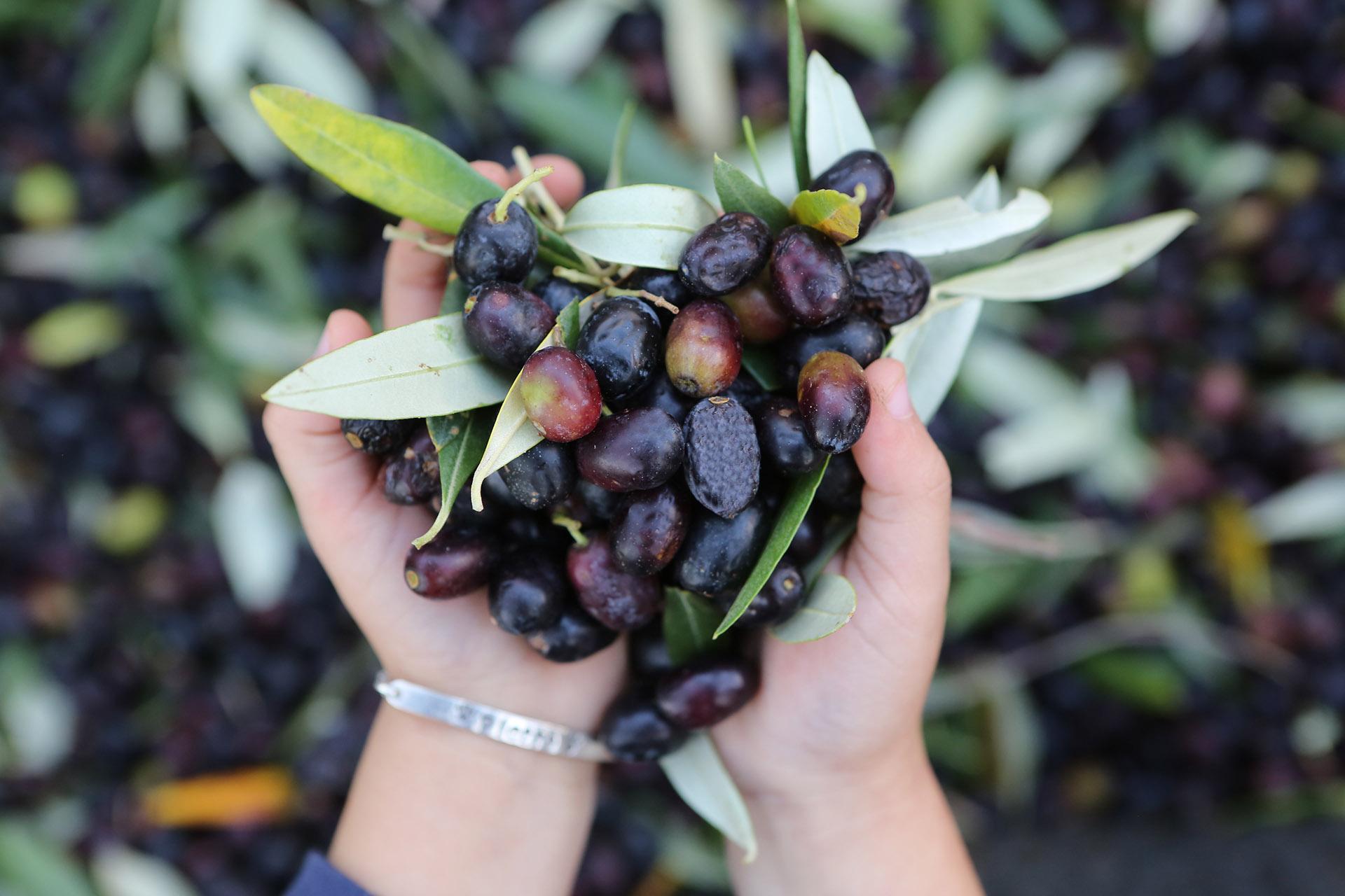 olivery natuurlijke olijfolie